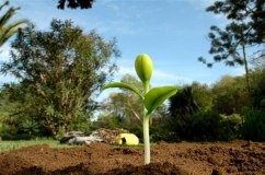 Rubber sprout/plant I made for a ´Rama` commercial, directed by Jacques Vereecken at Bike